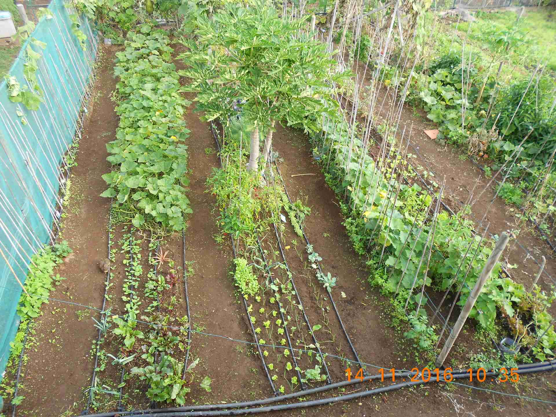 Allotments for rent finca ecologica la sabinita for Allotment tools for sale